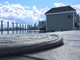 Green Turtle 1 boston skyline coiled line