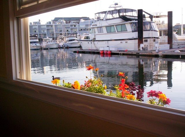 Green Turtle 1 marina view from window